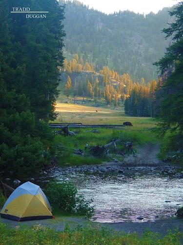 camping-buffalo2