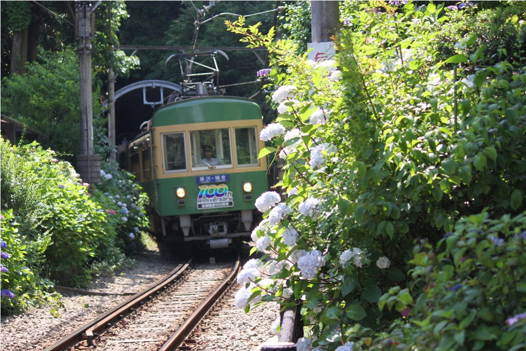 Hydrangeas - Exploring Hase, Kamakura (16)