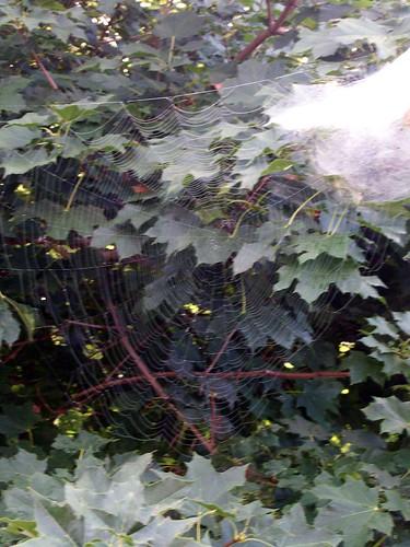 SpiderWeb_810b