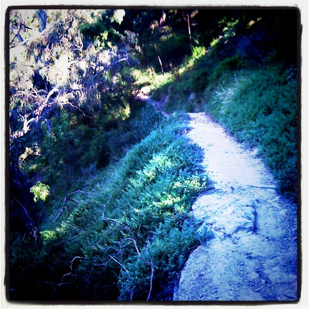 An awesome bit of trail this, key is to not fall 10m down to your left into the murky waters of the Yarra