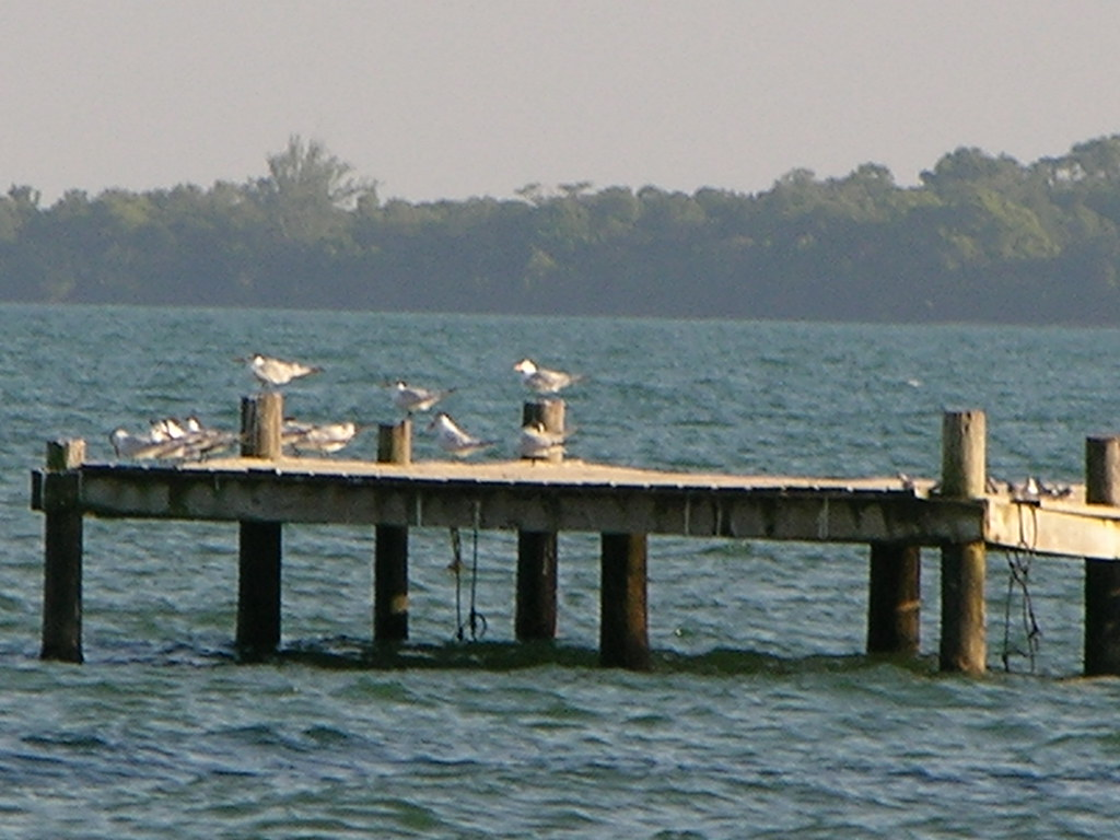 Hopkins-belize-birds
