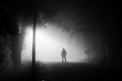 lurk (eb78) Tags: bw blackandwhite monochrome greyscale grayscale presidio fog dark sf sanfrancisco sfist ca california noir npy