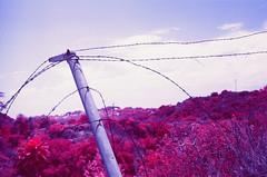 IR Barbed Wire (LeandroF) Tags: minoltasrt101 minolta 45mmf2rokkor film camera e6 chrome slidefilm fpp infrared infrachrome ir thedarkroomlab 35mm slr yellow12filter