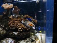 IMG_0241 (Alejandro Perez M.) Tags: medellin parqueexplora acuario