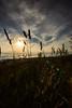 Final straw (grundi1) Tags: sony alpha 68 ilca a68 sigma1770f2845dcmacro verlaufsfilter sunset sonnenuntergang grashalm straw vanagram flower blume nature blau blue sigma 1770 f2845