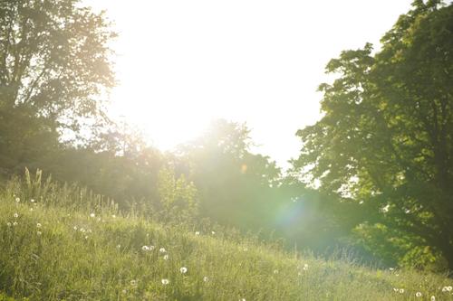 midsummer1