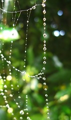IMG_2804 (pjpink) Tags: green water virginia beads drops web spiderweb richmond top20nature waterdrops rva farwestend