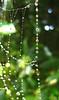 IMG_2804 (pjpink) Tags: green water virginia beads drops web spiderweb richmond top20nature waterdrops rva farwestend