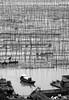 1260 Ready to disembark--Xiapu , Fujian Province , China (ngchongkin) Tags: china niceshot mostinteresting splash fujian soe shiningstar nationalgeographic musictomyeyes cbw hiddentreasure beautifulshot superphotographer imagomundi photographyrocks anythingyoulike royalgroup avpa flickrhearts flickraward flickrbronzeaward xiapu heartawards diamondstars flickrsspecial eperkeaward flickridol blackandwhiteartaward brilliantphotography thebestshot arealgem spiritofphotography 469photographer dizajnersi grouptripod doubledragonawards blackandwhitediamondawards photographerparadise artofimages angelawards dragonflyawards visionaryartsgallery contactaward selectbestfavorites sapphireawards flickrsgottalent bestpeopleschoice zodiacawards poppyawards fabulousplanetevo goldstarawardlevel1 flickrbronzetrophy fotografkurdu photographyforrecreationblackandwhite photographyforrecreationbronzeaward