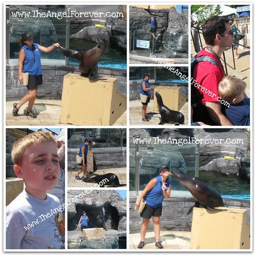 Sea Lion Show Fun