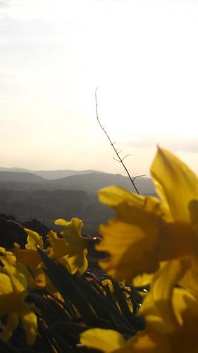 gorze and hills