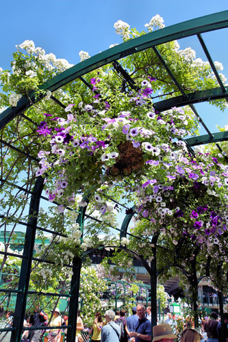 flower baskets at Wimbledon 9091 R