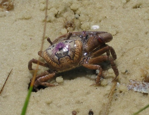 mud crabs Archives - Page 2 of 2 - The WFSU Ecology Blog