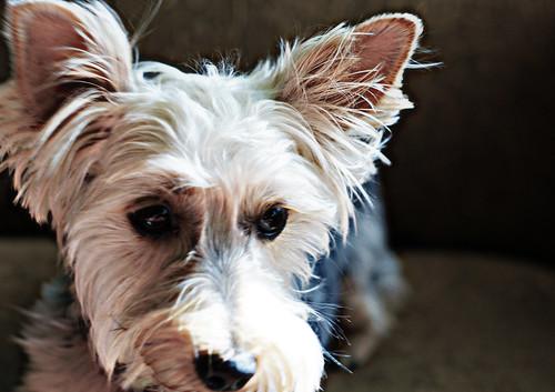 osita's portrait