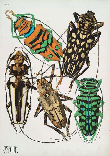 020-Insectes vingt planches en phototypie coloriées…1928- Eugene Alain Seguy