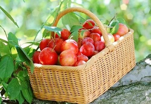 fruitandcharacter10