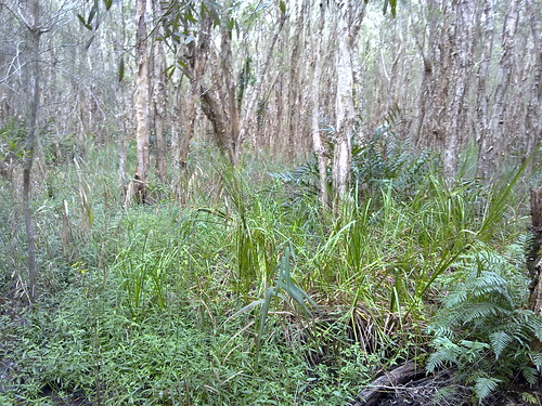Tea Tree Swamp (2 of 6)
