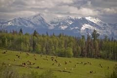 Cowboy Country (showbizinbc) Tags: bc britishcolumbia canyon fraserriver cariboo chilcotin cowboycountry fraserriverbasin
