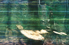 (iveneverbeenazombie) Tags: orange tree film girl forest 35mm lost holga juice lofi eerie 200iso stump scratched destroyed 120gcfn