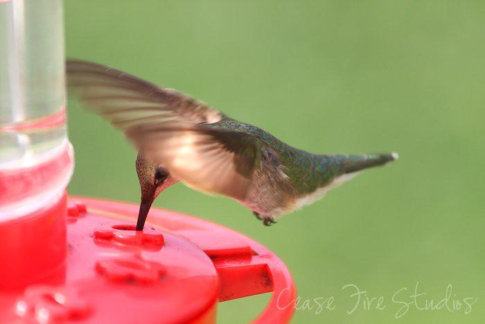07-05-humming1