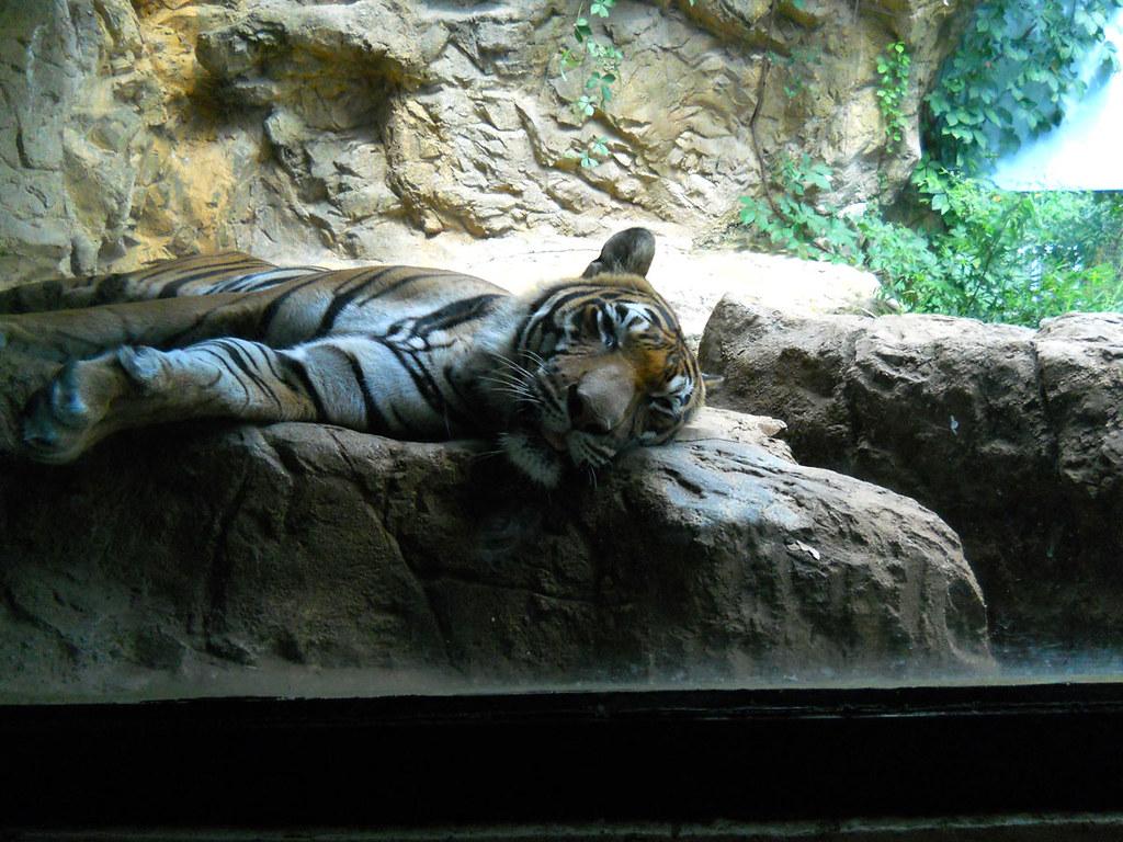 Zoo2010_020