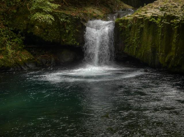 伊豆の美しい緑と清浄な水と空気