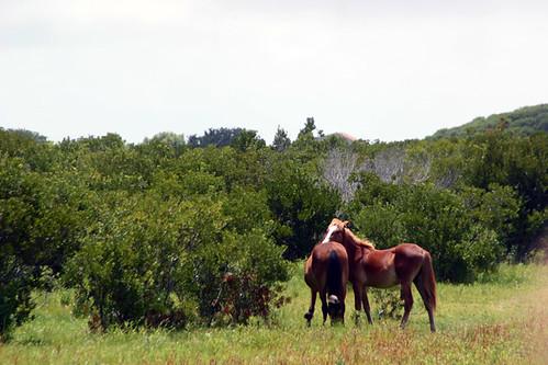 Wild, wild horses.