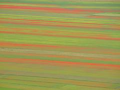 Natural carpet (filippo rome) Tags: castelluccio fioritura lenticchie umbria italy italia colors patterns texture flowers montisibillini parconazionaledeimontisibillini