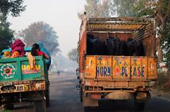 passengers (towards light) Tags: road travel people india cows delhi agra passengers trucks hornplease
