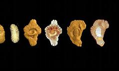 Fósiles de Gabón