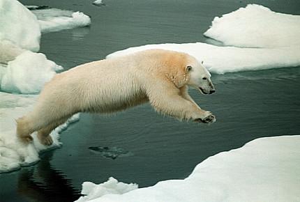 4798530293 d25a828bf6 Pemanasan Global Dunia, Bencana Alam Besar Bakal Berlaku !!