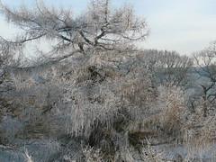 White Tree (akingsnorth) Tags: uk white cold wales frost harsh bala harshwinter hardwinter hardfrost