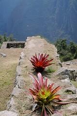 Machu Picchu (108)