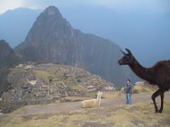 Machu Picchu (148)