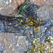 Rock365 : 13 07 2010 : Bismuthite
