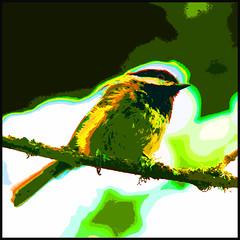 My Psychedelic Chickadee (1crzqbn) Tags: sunlight color bird chickadee hcs project365 artdigital exoticimage shuttersisters365 fadedblurred3652010 1crzqbn clichesaturday mypsychedelicchickadee
