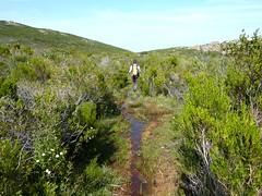 Sentier supérieur Rondinara - Balistra : les zones humides sur le plateau