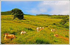 Bilbao Siesta (david gutierrez [ www.davidgutierrez.co.uk ]) Tags: urban mountain green spectacular landscape geotagged photo arquitectura cows image sony centre paisaje center bilbao 350 siesta sensational metropolis alpha plentzia gorliz euskalherria euskadi impressive dt basquecountry municipality f4556 1118mm sonyalphadt1118mmf4556 sony350dslra350