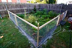 _MG_0206-1 (k.a. gilbert) Tags: fence project garden wire backyard weekend handheld manualfocus 116 tokina1116mmf28 antivermin