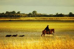 Amigos... (Eduardo Amorim) Tags: brazil horses horse dog chien co dogs southamerica field cane brasil caballo cheval caballos bravo cusco perro hund cachorro campo ces perros cavalos marsh cachorros pferde ma