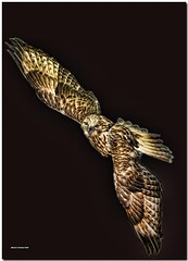 Owl In The Black of Night (MyRidgebacks - Sharon C Johnson) Tags: birds wildlife owl layers supershot magicofnature specanimal mywinners impressedbeauty flickrdiamond myridgebacksphotography magicunicornverybest