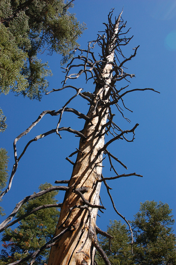stripped-tree,-looking-up!.jpg
