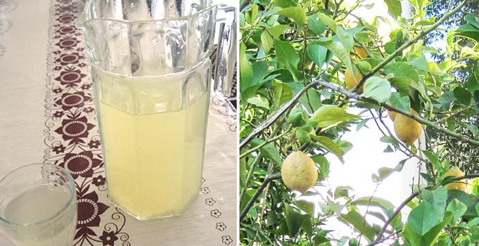 Svalkande lemonad