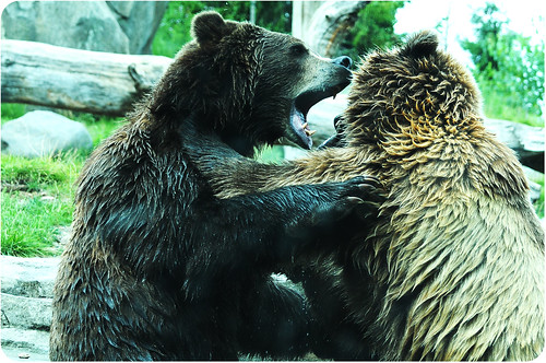MN zoo bear fight