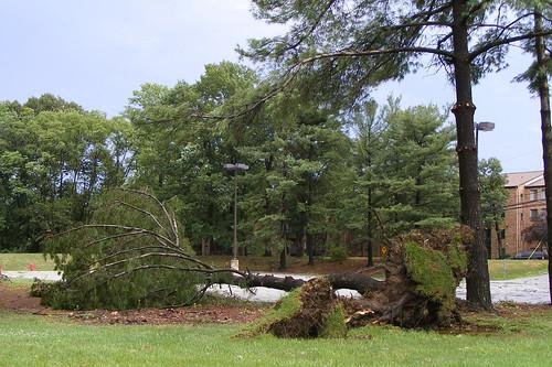 Downed Tree, Stewart Lane & 29
