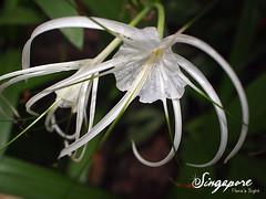 20100717-2 環球影城 E-P1 (48) (fifi_chiang) Tags: travel flower singapore olympus ep1 universalstudio 17mm 環球影城 新加坡 失落的世界