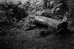 Bench (Alastair Cummins) Tags: wood bw nature forest bench log woods nikon seat reserve rest 1855mm d40