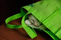 角太郎的睡袋 (kimi kao) Tags: cat pat 寵物 貓 貓咪