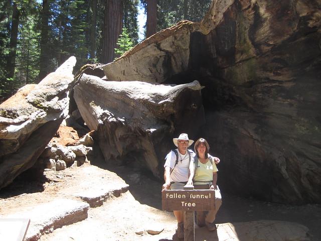 Mariposa Grove, Yosemite CA