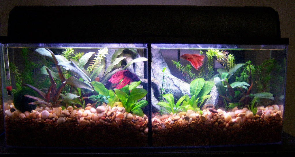 Bookshelf Aquarium By Petco With Divider For Two Bettas